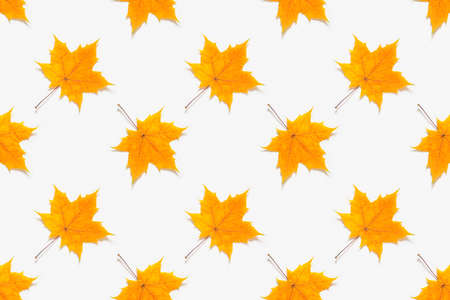 Autumn seamless pattern. Yellow maple leaves on white background