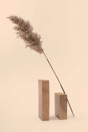 Dry reed branch and rectangular wooden blocks on beige background. Trend minimalistic balance composition. Boho or Scandinavian style poster in modern home interior.