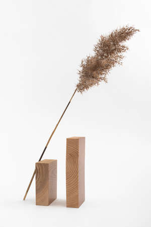 Dry reed beige branch and rectangular wooden blocks on white background. Trend minimalistic balance composition. Boho or Scandinavian style poster in modern home interior. Фото со стока