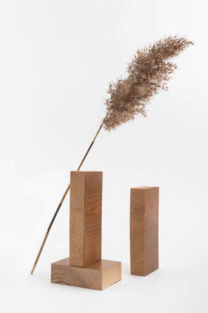 Dry reed beige branch and rectangular wooden blocks on white background. Trend minimalistic balance composition. Boho or Scandinavian style poster in modern home interior