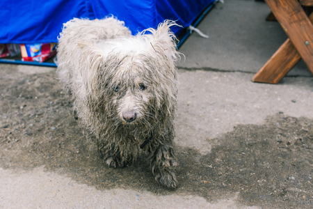 The look of a stray dog. Sad, lonely dog on the street. Dirty and wet coat. The animal is looking for its owner