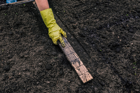 The hand of a woman in a glove measures the distance for planting young plants into the soil. In the hands of the gardener wooden ruler. Fertile land. Gardening or planting concept Stok Fotoğraf