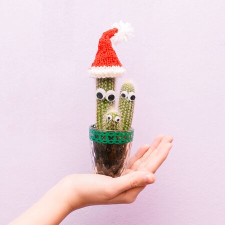 Christmas cactus. Creative christmas concept. New Year. Funny cactus with eyes. At the top of the cactus is wearing a Santa Claus hat. Reklamní fotografie