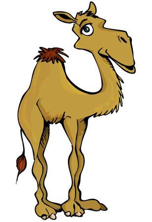 cartoon camel: Cartoon smiling one hump Camel isolated on white