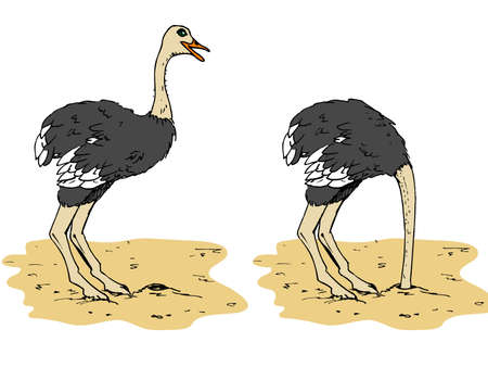 ostrich: Cartoon ostrich with head below sand. Isolated on white
