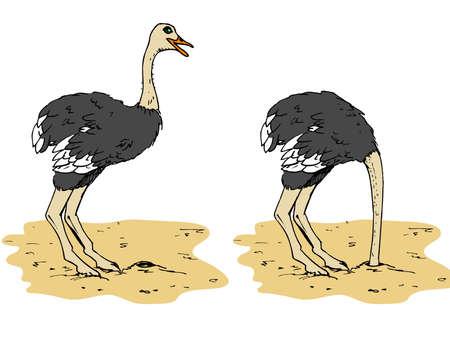 avestruz: Dibujo animado de avestruz con la cabeza por debajo de la arena. Aislado en blanco