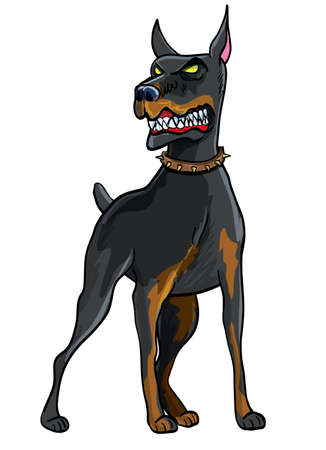 angry dog: Doberman Pinscher Illustration isolated on white background