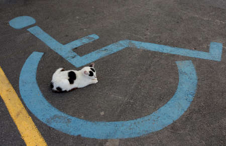 challenged: Wheelchair Handicap Sign on dark asphalt road and sleeping cat Stock Photo