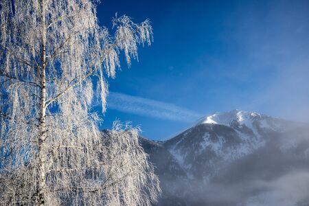 brich: Mountain brich in frost. Bad-Gastein, Austria. Stock Photo