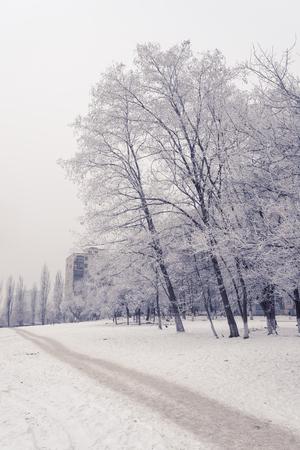 frozen trees: Frozen trees in a small city park. Kiev, Ukraine.