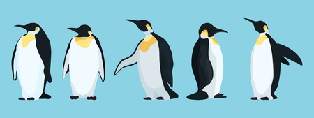 bright penguins characters in different poses.stock vector illustration