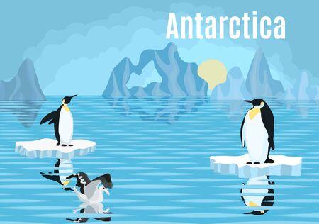 affiche pingouins sur iceberg antarctique albatros nouveau Vecteurs