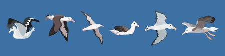 albatross bird of the southern cold seas and antarctica