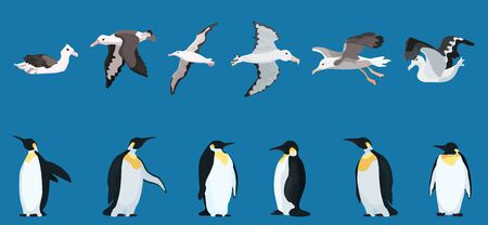 albatrosses and penguins large selection. bright characters. vector illustration