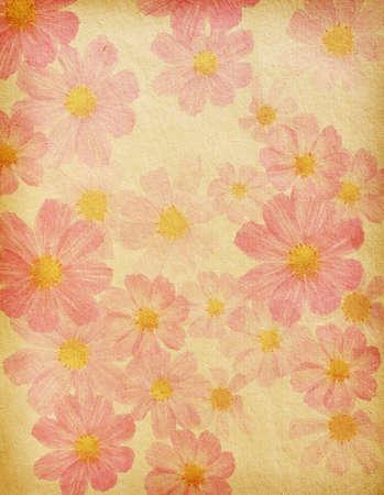 vintage  paper textures.  cosmea photo