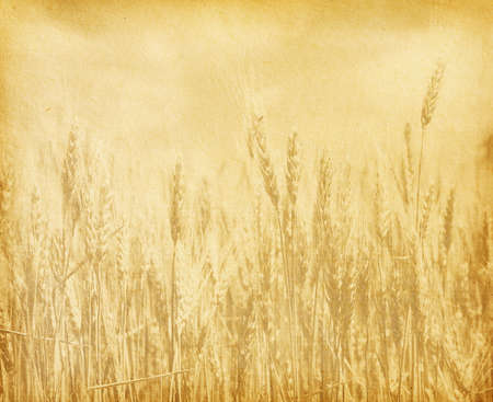 old paper  field of wheat  sepia photo