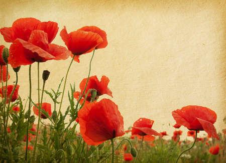 fiori di campo: texture carta d'epoca. Campo di papaveri Archivio Fotografico