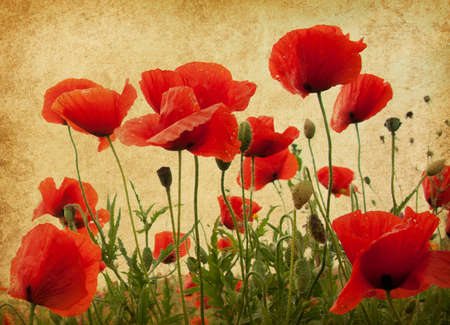 vintage paper textures. Field of poppies photo