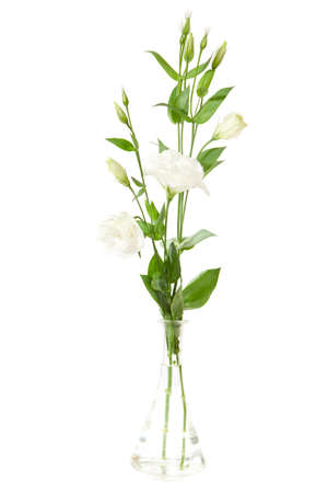 Vase Of Flowers Isolated On White Eustoma Stock Photo Picture And