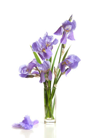 crowded space: bouquet of spring purple Irises in a vase isolated on a white background