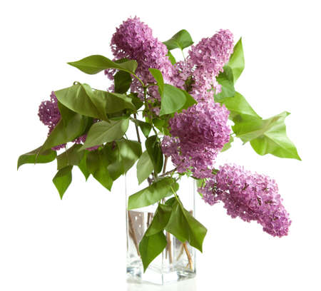 bouquet of spring purple Lilac in a vase  isolated on a white background   Stock Photo