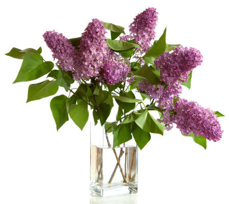 still water: bouquet of spring purple Lilac in a vase isolated on a white background  Stock Photo