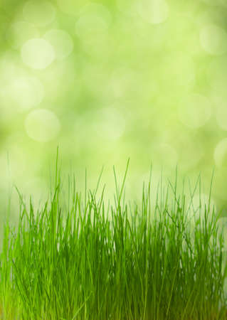 fresh spring  grass on on defocused light green background. very shallow depth of field. photo