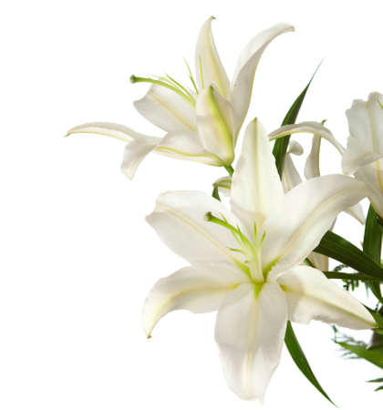 a fragment of white lilies  bunch on a white background