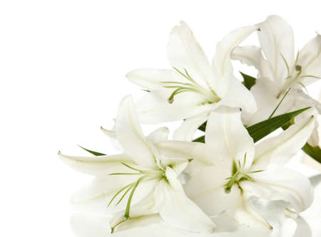 a fragment of white lilies  bunch on a white background photo