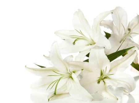 """ein Fragment von weißen Lilien """"Haufen auf weißem Hintergrund"""