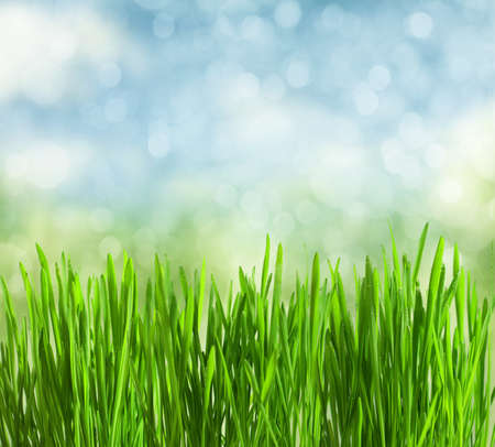 fresh spring grass with drops on defocused light blue background  photo