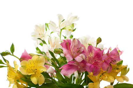 Bouquet of Alstroemeria flowers isolated on white background  Focus on the foreground Stock Photo - 13123968
