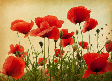 poppy field: vintage paper textures. Field of poppies