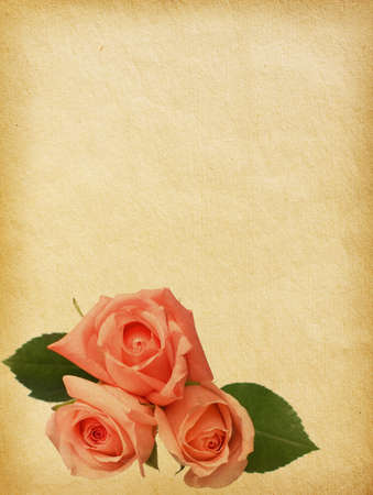 paper textures with  tree roses photo