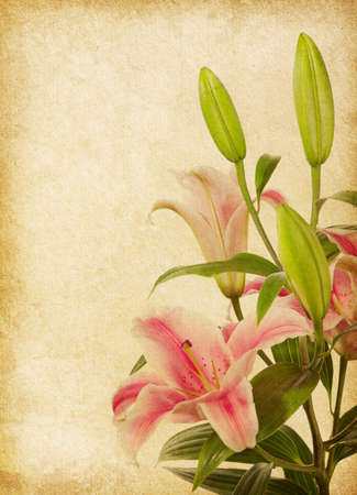 pink lily: old grunge background with lilies. paper texture