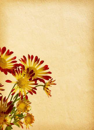 vintage paper  with chrysanthemum photo