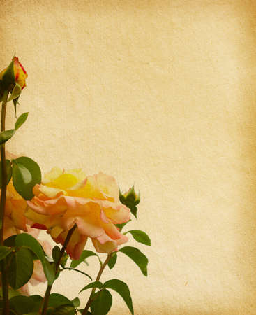old paper texture with roses