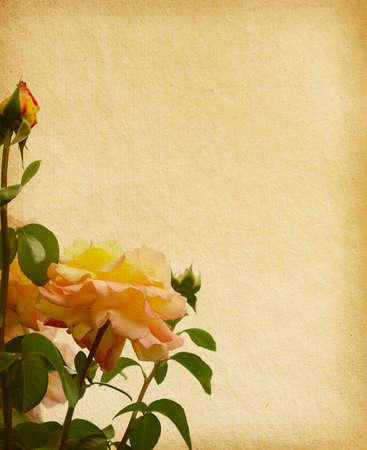 régi papír anyagában rózsák