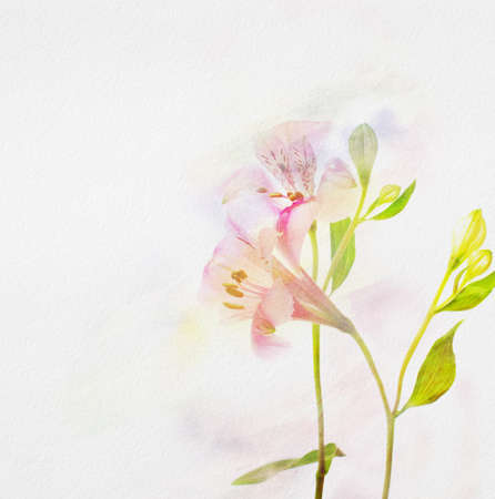 Alstroemeria flowers on  watercolor paper   photo