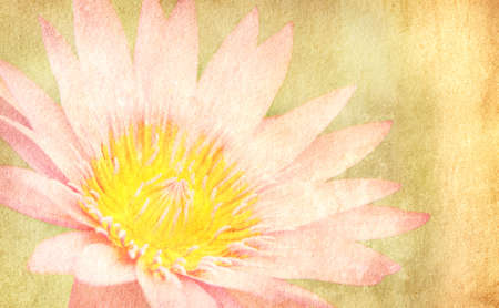 Close-up of pink  lotus on the  old grunge paper background photo