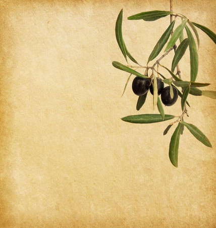 Beige background.  old paper  with black olives branches photo