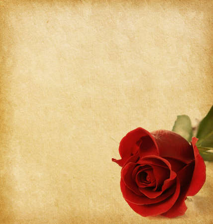 old paper texture with red rose photo