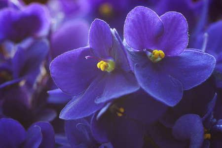lila virágok egy nagyon sekély mélységélesség, elsősorban a jobb flower
