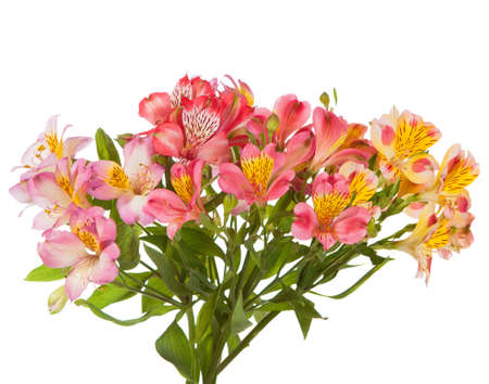 Bouquet of Alstroemeria flowers isolated on white background.  photo