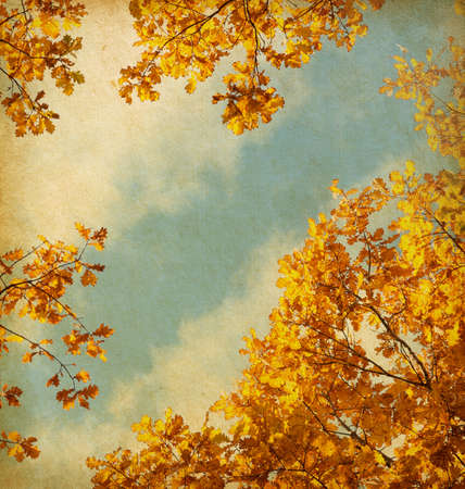 old paper  retro image of Autumn leaves on the sky background Stock Photo