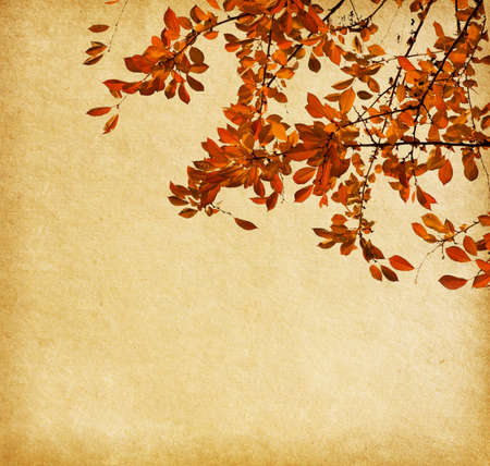 Old paper with branch of autumn leaves  Cherry plum photo