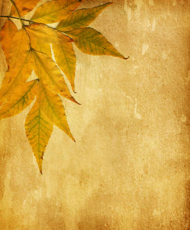 old paper with  dry autumn leaves Stock Photo - 15077770