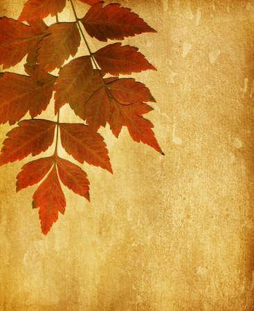 hojas antiguas: papel viejo con las hojas de otoño secas
