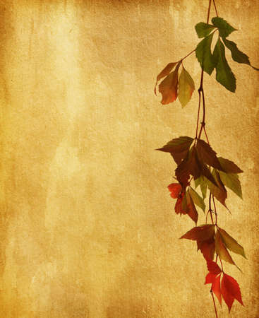 old paper with  dry autumn leaves Stock Photo - 15077775