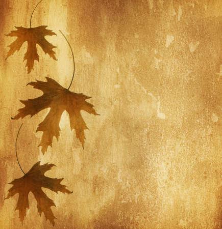 régi papír száraz őszi levelek Stock fotó